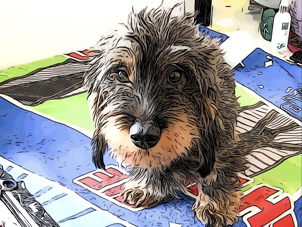 cuando debo cortar el pelo al perro: consejos y cuidados