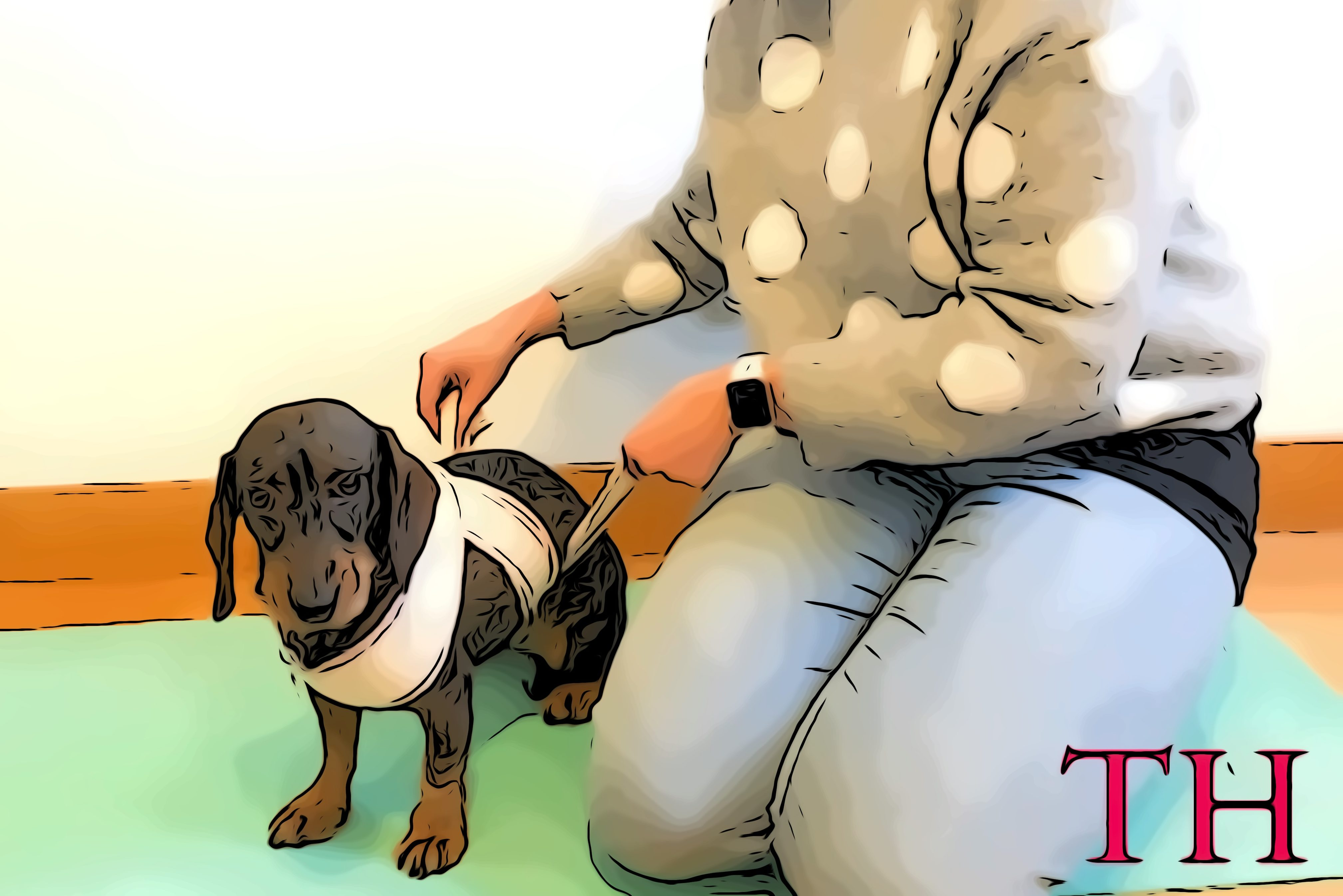 Com hacer vendaje antiestress perros