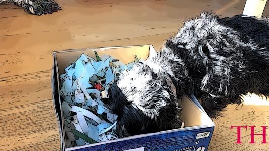 Caja olfativa perros