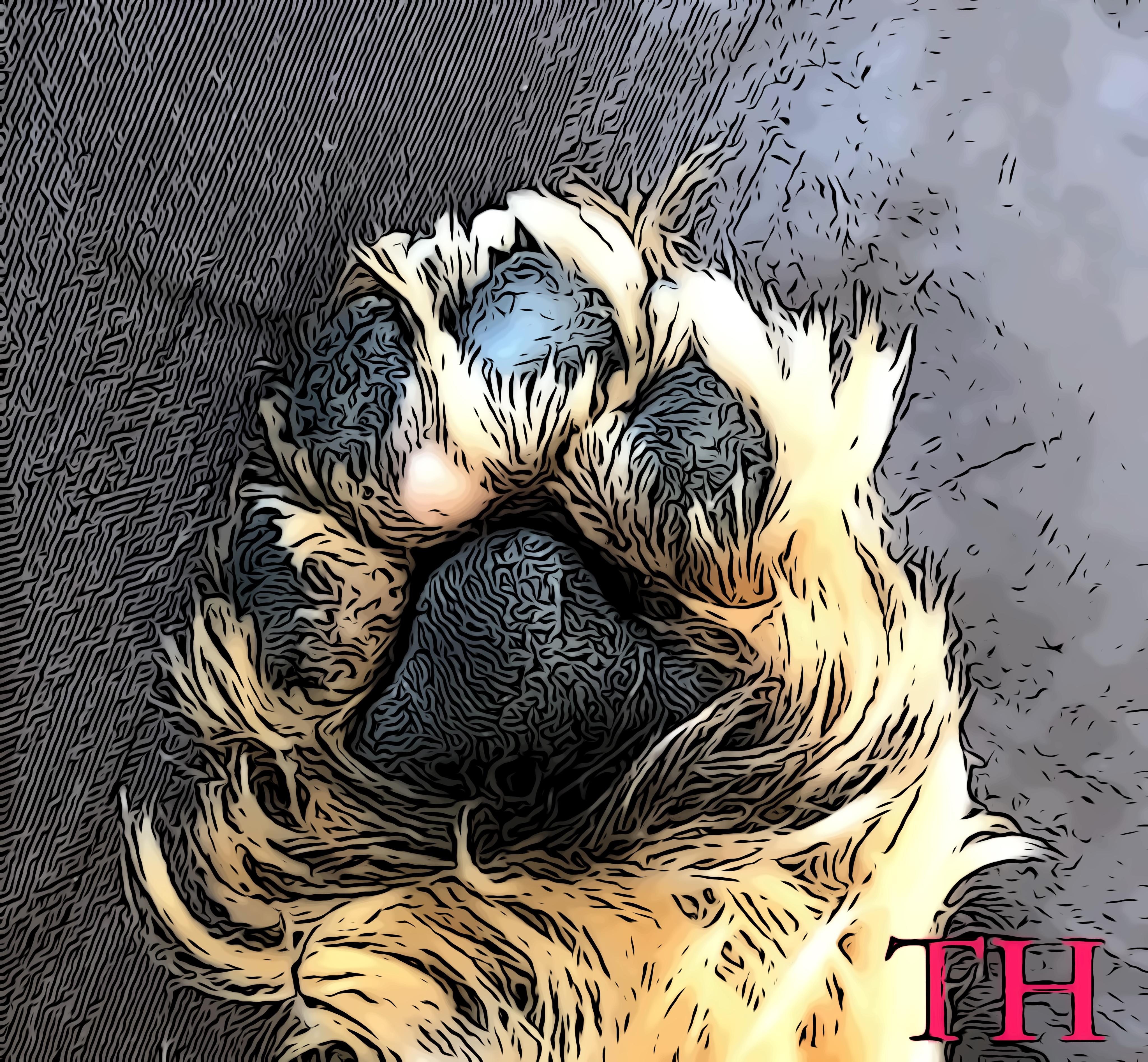 Los cuidados almohadillas en perros