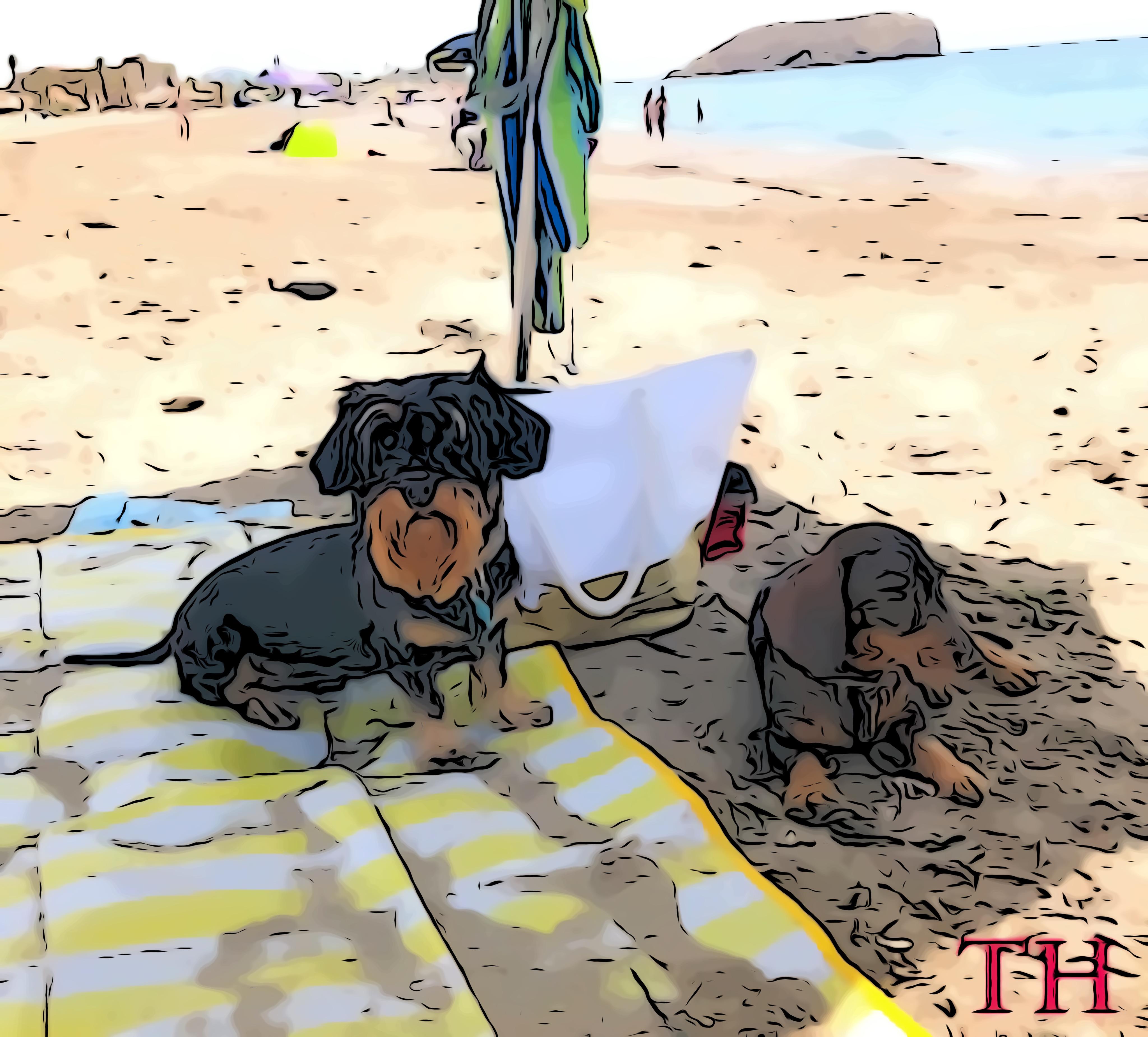 Al agua perros
