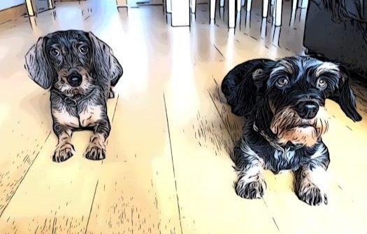 Practica autocontrol con perro