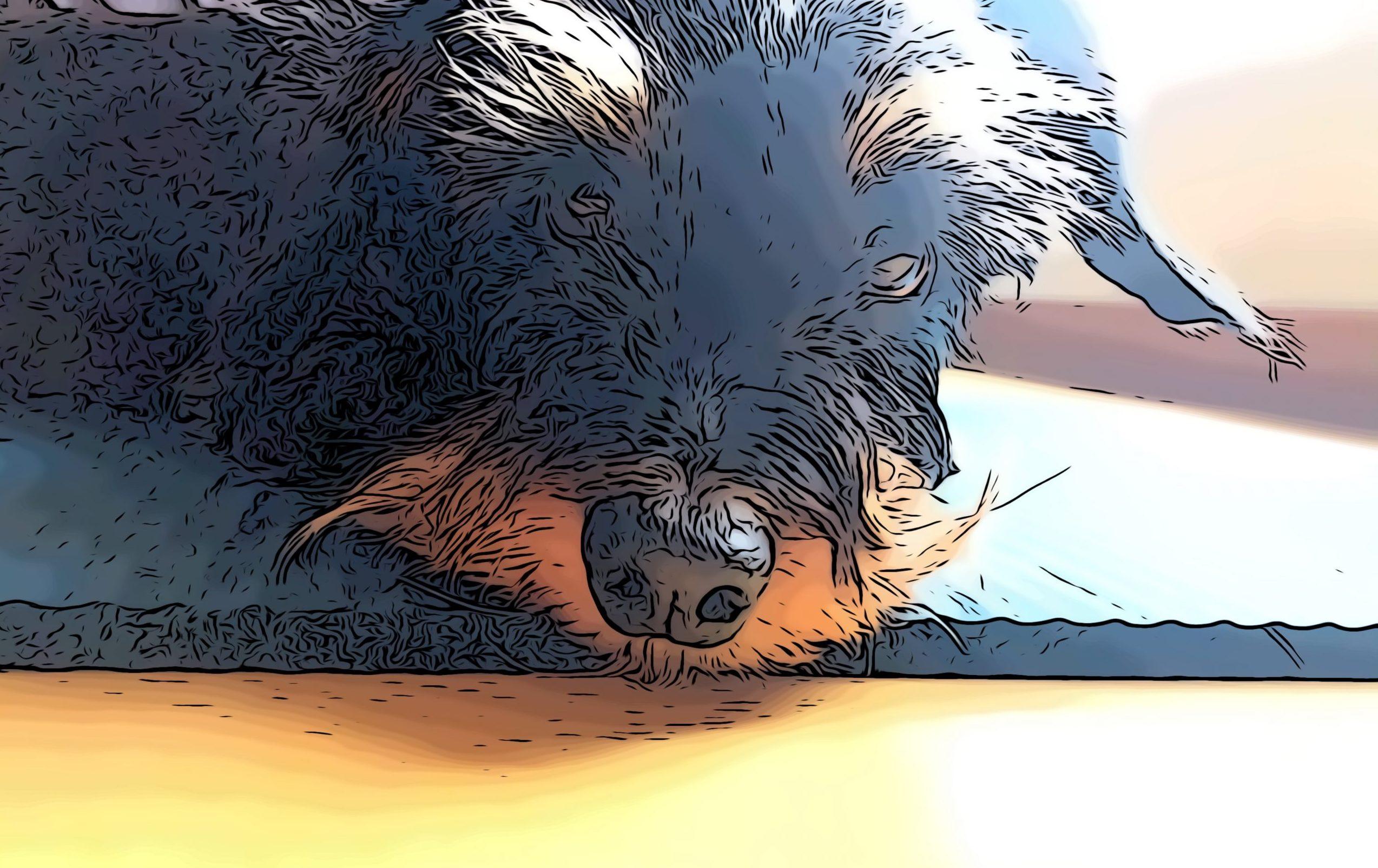 Aunque en un principio pensábamos que para ellos sería la situación ideal, ahora sabemos que también le afecta el confinamiento a mi perro.