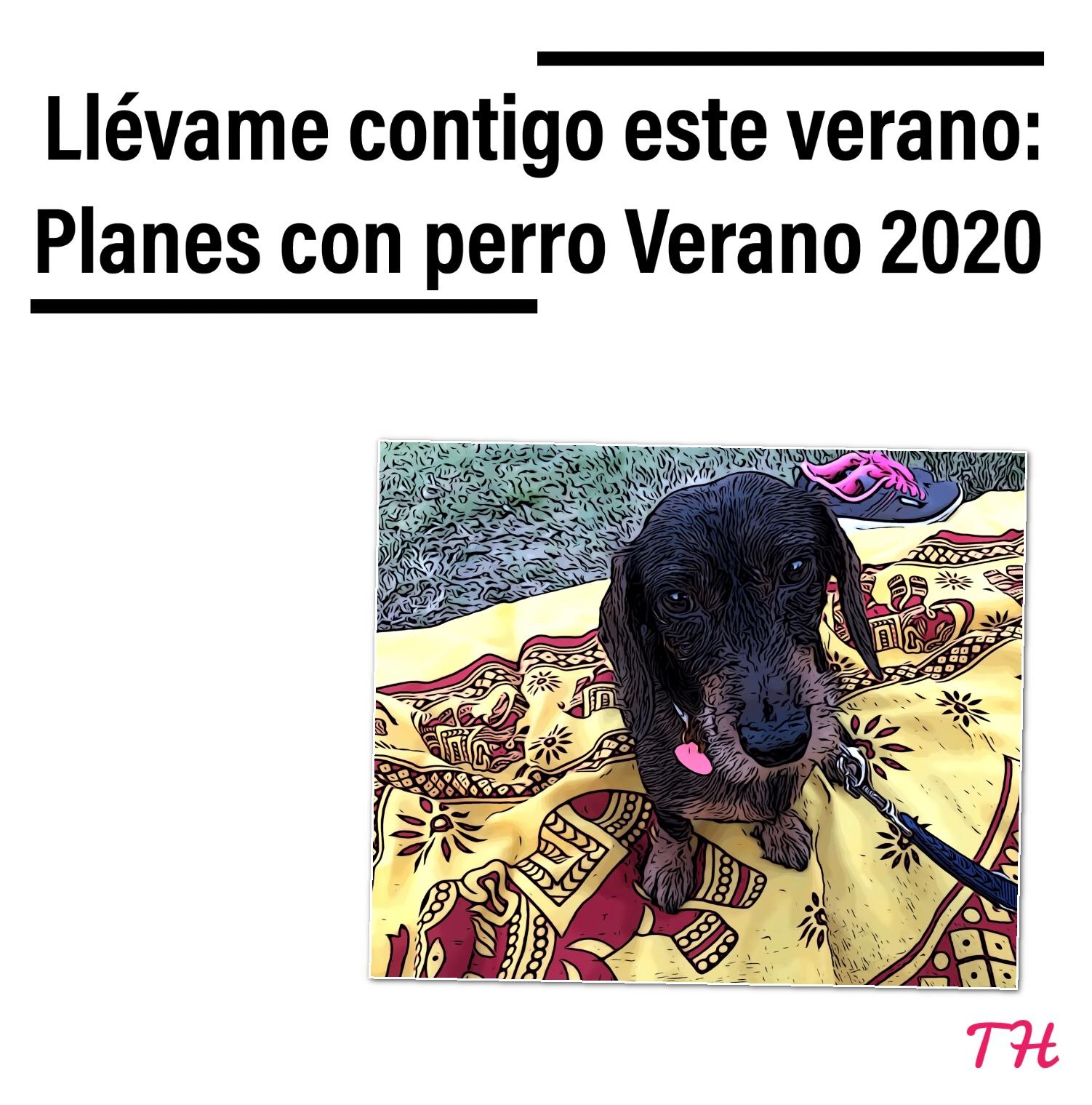 Planes Verano 2020 con perro
