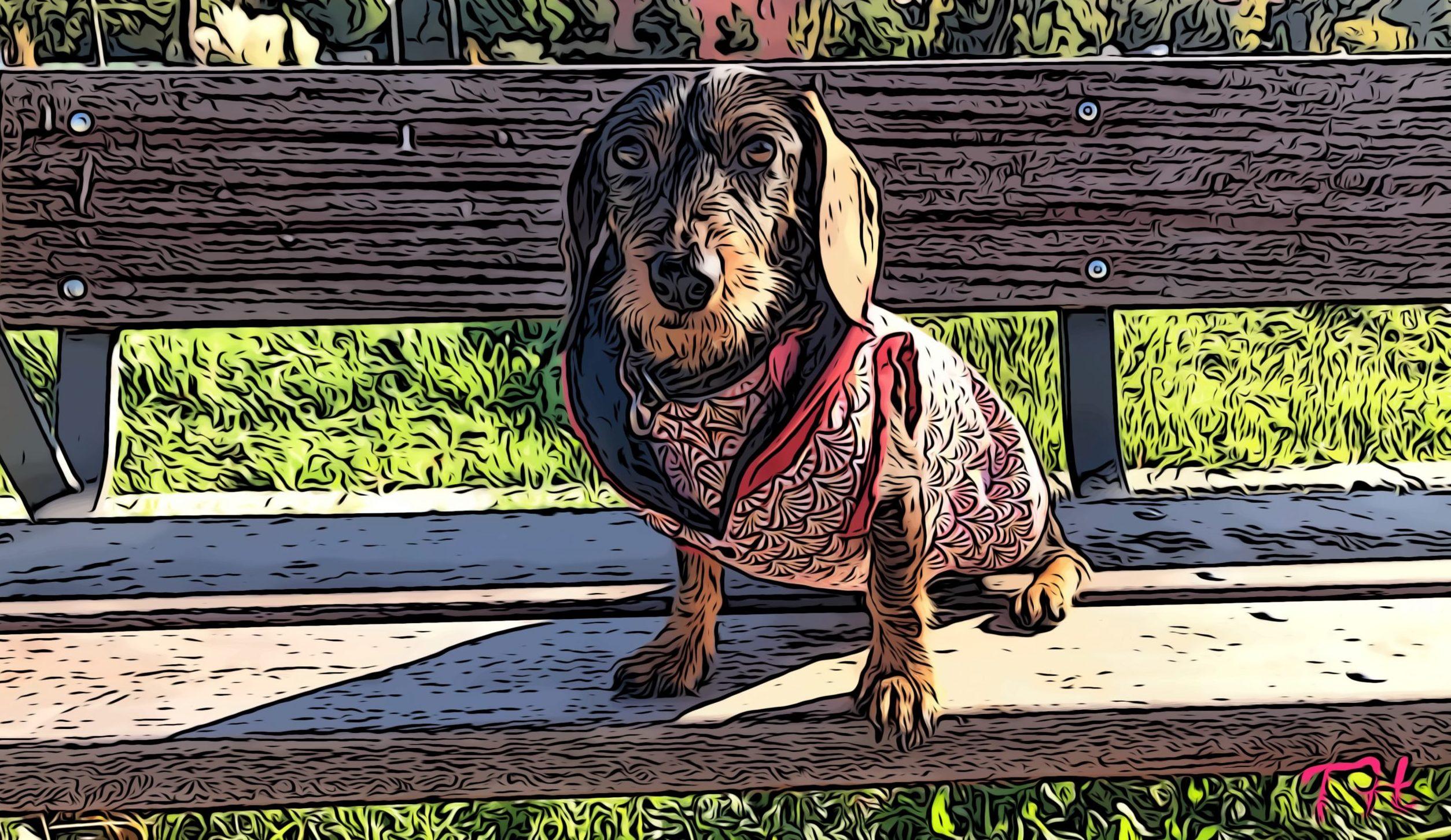 Abrigo para arnés perro DIY