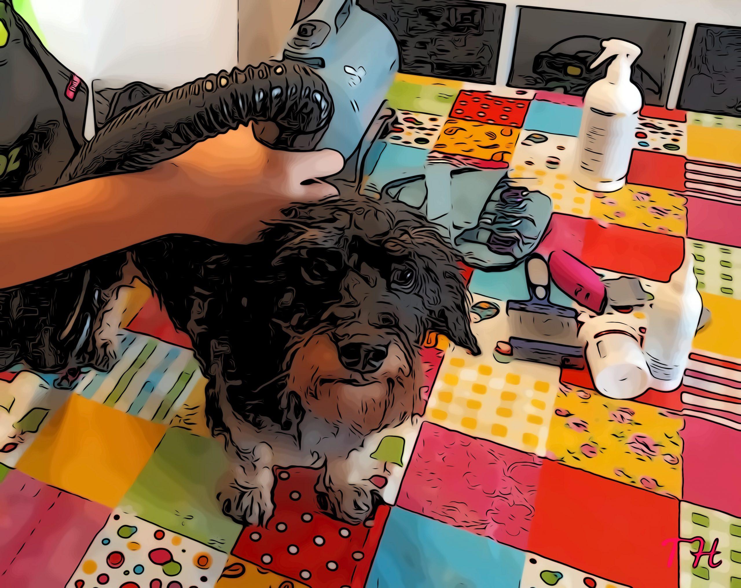 Mantener la higiene de tu perro en invierno